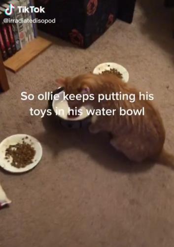 Хозяйка не понимала почему её кот кладёт в миску свои игрушки. Оказалось, её питомец просто любит чаёк с мятой