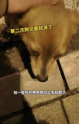 Женщина покормила дворового пса колбаской и не поверила своим глазам. И глазам собаки тоже