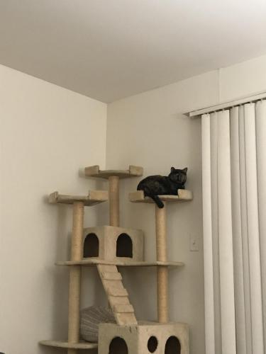 Собачница сфоткала кота и поняла, что сделала правильный выбор. Его человеческое лицо трудно забыть