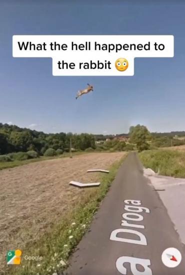 В Сети нашёлся заяц Шрёдингера. Он находится в двух местах одновременно, но разгадка его тайны весьма грустная