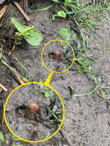 Девушка обнаружила человеческий палец в земле и сообщила о