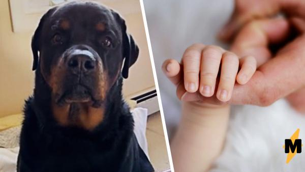 """Девушка при собаке учила дочку слову """"мама"""". Пёс так устал ждать, что решил заговорить сам - и получилось же"""