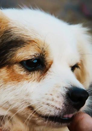 Парень ночью привёл домой бродячего пса, но утром его ждал сюрприз. Новый питомец был совсем не собакой