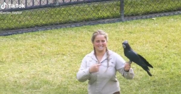 К девушке на трибуне подлетел попугай. Она расплакалась, когда увидела, что птица держит в клюве