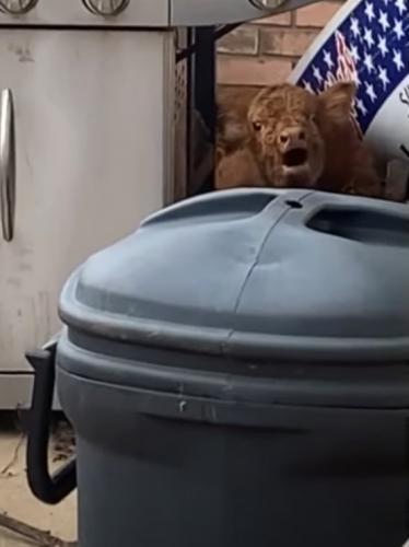 Парень ночью привёл домой бездомного пса, но утром его ждал сюрприз. Новый питомец был совсем не собакой