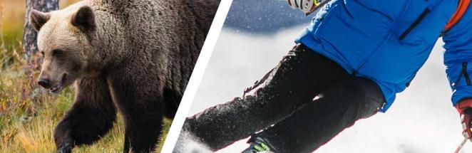 Парень в Румынии прокатился на лыжах, а за ним увязался зверюга. Теперь там две беды: вампиры и медведи
