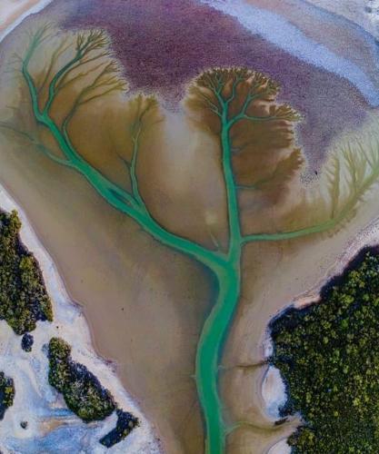 Фотограф сфотографировал озеро и стал знаменит. Чайное дерево нарисовало автопортрет, но ему премию не выпишут