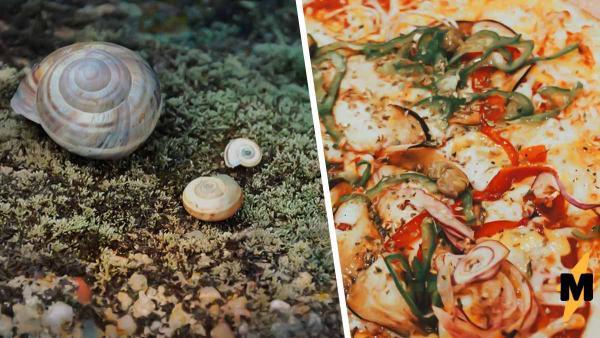Парень показал моллюска у берегов Австралии, но не испугал людей. Ведь все видят в нём пиццу, даже Google