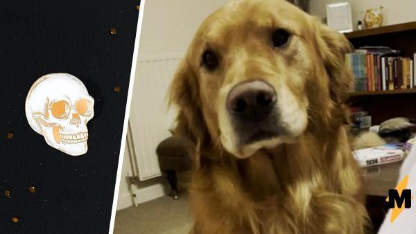 Хозяйка показала, как улыбается её собака, и такая морда может испугать.