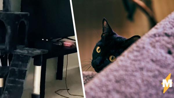 Девушка испугалась, заметив взгляд кошки, но то был геймпад. Настоящий же питомец оказался не менее зловещим