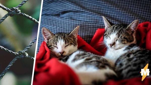 Парень посадил своих котов в клетку и, решил одну из мировых проблем. Люди верят: это вечный двигатель