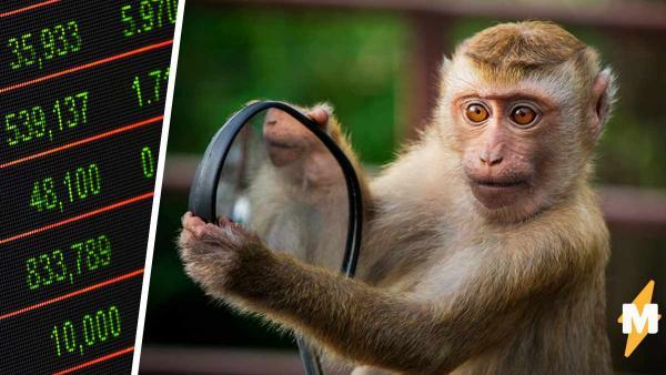 Учёные: обезьянки - крутые экономисты. Они анализируют людей и воруют ценное, но выкупить обратно - проблема