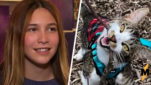 Девочка написала трогательное эссе про своего котика. Оно вошло в топы и сделало её миллионершей