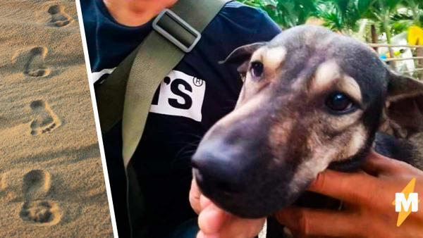 Байкер услышал истошно лающую собаку и не зря пошёл за ней. Увидев, к кому привёл пёс, пришлось звать полицию