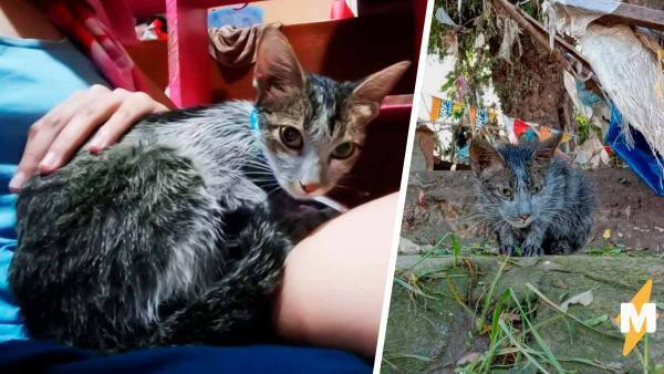 """Девушка подобрала кошку, а та оказалась Мистик из """"Людей Икс"""". Через пару дней она мимикрировала под хозяйку"""