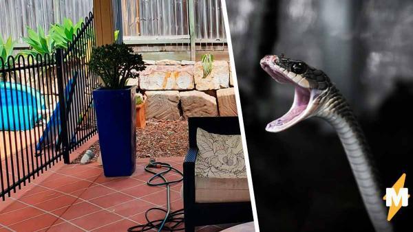 Змееловы показали фото рептилии и сломали людям глаза. Она - гуру стелса, и найти её сложнее, чем второй носок