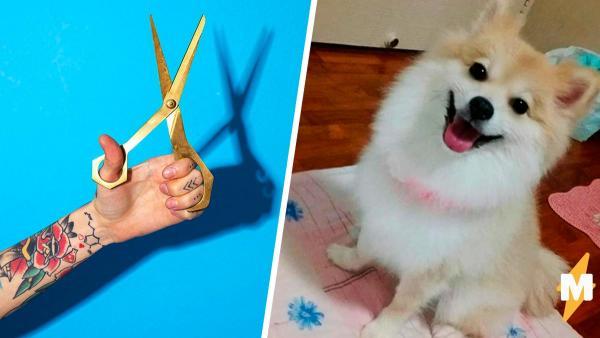 Владельцы привели собаку к грумеру, а тот вернул только половину животного. Такую стрижку невозможно простить