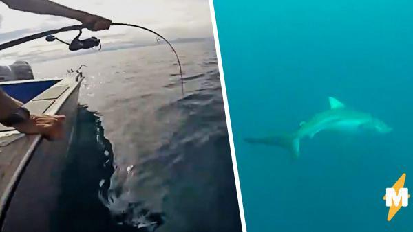Приятели поздно поняли, кого поймали на крючок. Акула заставила их извиняться вполне человеческим способом