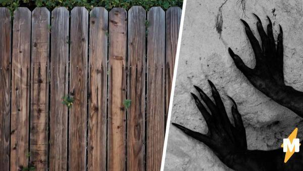 Женщина вышла во двор и заметила, что забор ожил. Самым удивительным в этой ситуации было одно - её реакция