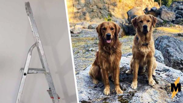 Хозяин упустил из виду собаку, но стоило ему посмотреть наверх, как он понял: его животное — пёс-паук
