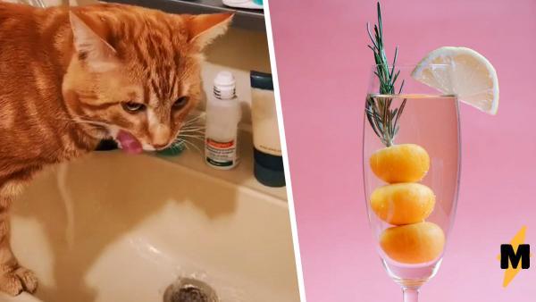 Кот не даёт хозяйке пить алкоголь, делая «кусь». Но кошатники знают: проблемы у самого пушистого нарколога