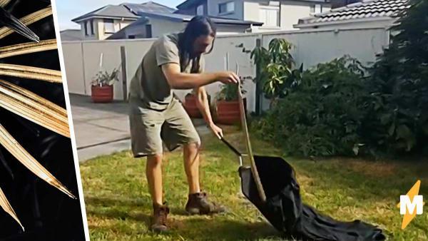 Пёс рылся во дворе и выкопал нового друга. Но когда хозяева увидели его, поняли: без спасателей не обойтись
