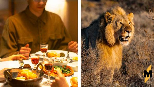 Туристов пригласили на пикник в саванне, но стол был уже занят. И глядя на гостя, люди поняли: еда тут - они