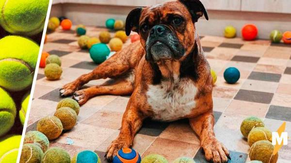 Собака играла с теннисным мячиком и чуть не умерла. Ветеринар объясняет: теннис не для пёсиков