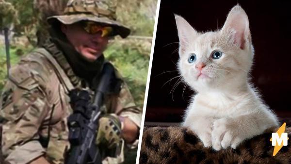 Криминальный ветеран выбрал котика в приюте, но его заставили ждать. Он решил проблему в стиле Джона Уика