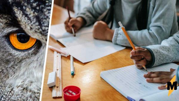 Учитель дал ученикам домашку в мемах, не проверив условия. Упражнение повеселило детей, но разгневало взрослых