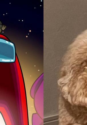 Квадратный пёс попал на фото и стал мемом об Among Us. Ведь срочное собрание геймеров признало в нём импостера