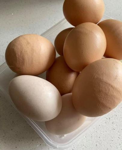 Женщина думала, курица несёт странные яйца, но увидела урожай других. После яйца-арахиса мир не будет прежним