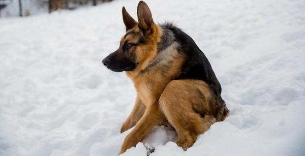Хозяин показал своего пса и доказал: сутулая собака не мем, а диагноз. А зрителям всё равно - они уже влюблены