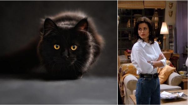 """Блогерша лишилась фолловеров из-за несуществующего кота. Она не узнала интерьер """"Друзей"""", за что и поплатилась"""