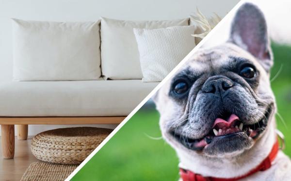 Хозяйка купила псов, но не заметила, что они сливаются с мебелью. Теперь, чтобы их найти, ей надо ломать глаза