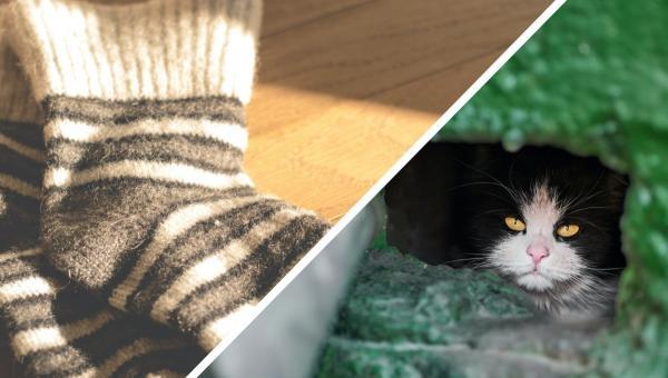 Хозяин купил носки, чтобы впечатлить котов, и познал успех. Реакция его питомцев теперь сгодится для мемов