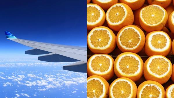 Пассажиры съели ящик апельсинов, чтобы не платить за багаж. Узнав, сколько это в кило, люди надеются: это фейк
