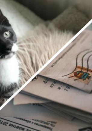 Кот вернулся с прогулки и принёс хозяйке записку. Так она и обрела загадочных друзей и питомца-почтальона