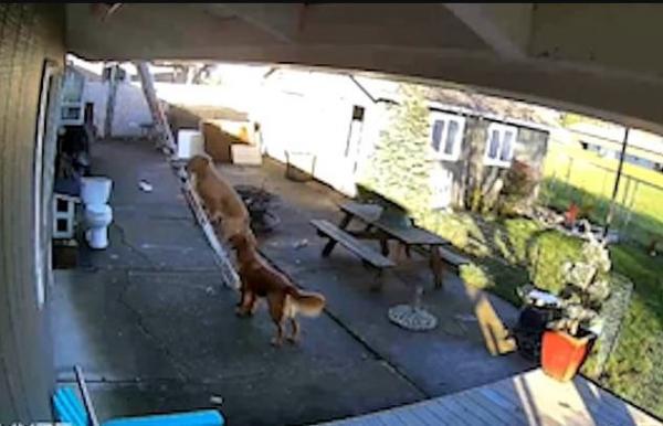 Хозяин упустил из виду собаку, но стоило ему посмотреть наверх, как он понял: его собака — спайдер-пёс