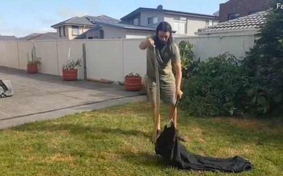 Собакен завёл ядовитую подружку. Увидев её, семья вызывала спасателя, вступившего с ней в схватку на видео