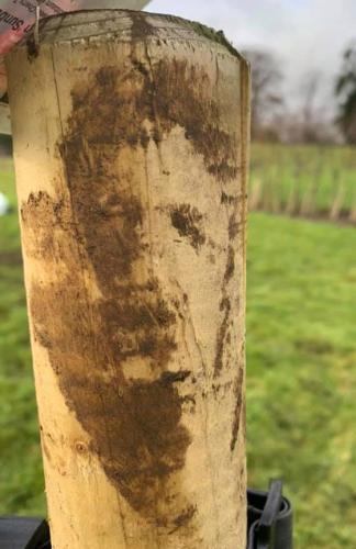 Дерево сыграло самого Аль Пачино. Оно, определённо заслуживает Оскар, по мнению одного садовника