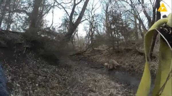 Лесной рейнджер спас двух оленей с помощью пистолета. Клинт Иствуд одобряет