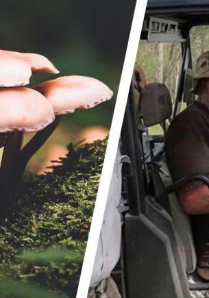 Турист пошёл гулять и похудел на 10 килограммов. Беар Гриллс, принимай челлендж «Три недели в лесах Австралии»