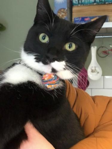 Хозяйка встретила кота с прогулки и нашла за ошейником послание. Теперь питомец - почтальон между соседями