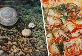Парень показал моллюска, или это пицца? Будто Посейдон обронил лакомство, и даже Google ломается при его виде