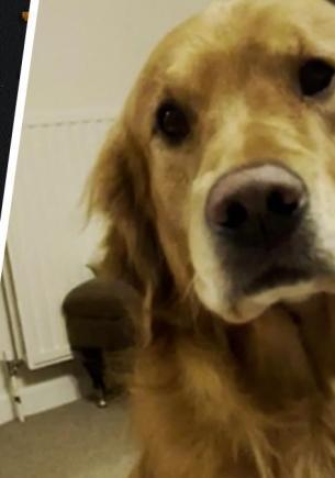 Хозяйка научила пса улыбаться, но смотреть на его ухмылку страшно. Кажется, он учился мимике у Терминатора