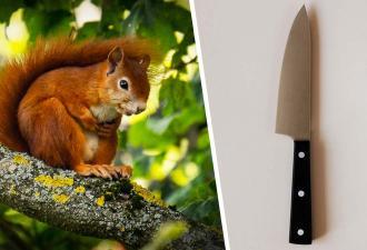 Женщина вышла во двор и испугалась: её ждала белка с ножом. Видео смешное, а ситуация страшная
