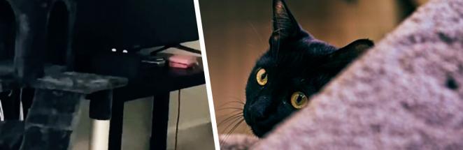 Девушка испугалась геймпада, подумав, что за ней следит кошка. Только вот питомец напугал людей ещё больше