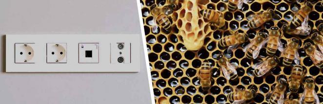 Парень показал на фото, как из розетки течёт мёд. И люди поняли: в стенах этого дома прячутся опасные соседи