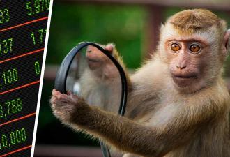 Учёные: обезьянки — крутые экономисты. Они анализируют людей и воруют ценное, но выкупить обратно — проблема